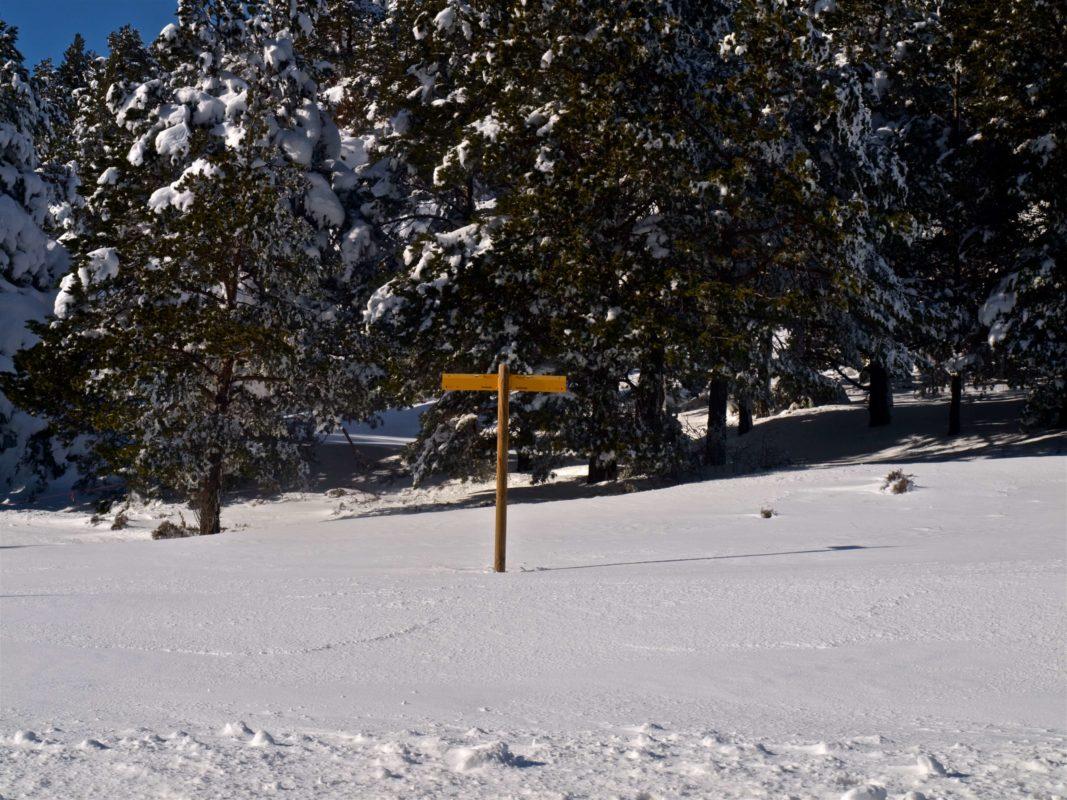 Winter GR8 Cuarto Pelado