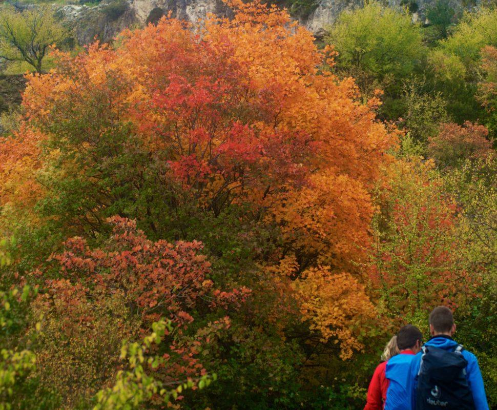 Autumn colours portray