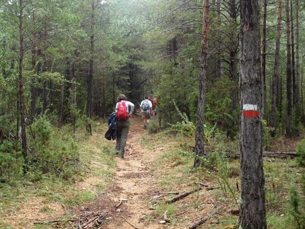 Way mark trail
