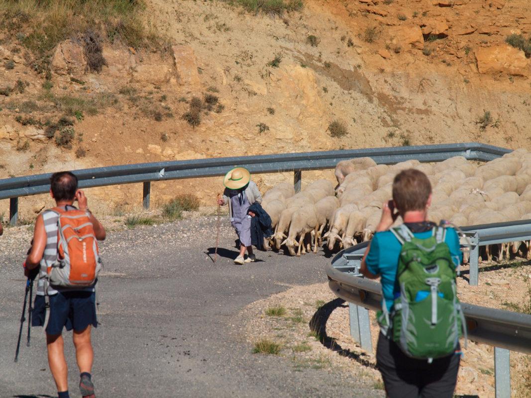 vias pecuarias cattle roads